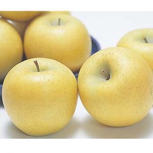 長野県産 シナノゴールド(りんご) 2.5kg|送料込|busan-nagano