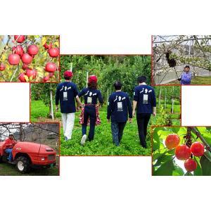 りんご シナノレッド 5kg 18玉 送料無料 国産 山形産 |bussan10|05
