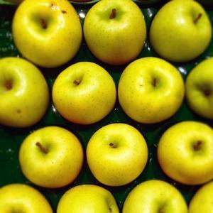 りんご シナノゴールド 5kg 18玉 送料無料 国産 山形産  bussan10 02