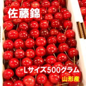 さくらんぼ 佐藤錦 Lサイズ 500グラム クール便発送 山形産|bussan10