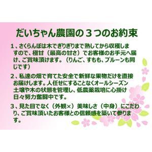 さくらんぼ 佐藤錦 2Lサイズ 500グラム クール便発送 山形産|bussan10|06