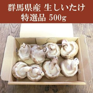 群馬県産 しいたけ(椎茸) 特選品 500g 生しいたけ きのこ bussan10