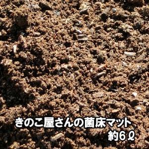 きのこ屋さんの菌床マット 昆虫マット 約6リットル 無農薬 家庭菜園