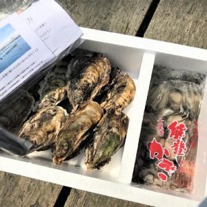 殻付き能登牡蠣(かき)15個+むき身(加熱用)500g 専用ナイフ 片手用軍手付|bussan10