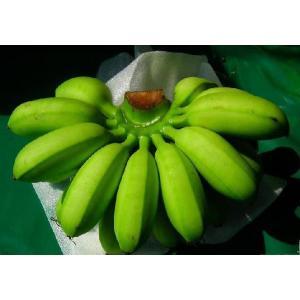 バナナ苗 卵バナナ苗|bussannet