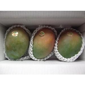 【沖縄県産】キーツマンゴー2kg・2〜3玉入り 白箱 家庭用 bussannet