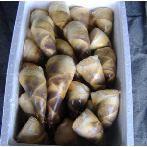 食用タケノコ 緑竹取木|bussannet|02