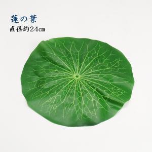 蓮の葉(直径約24cm)|butudan