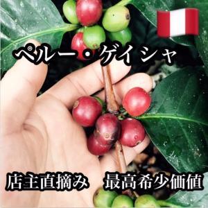 コーヒー豆 素晴らしい上品さ ペルー ゲイシャ- 200g|cafe-adachi