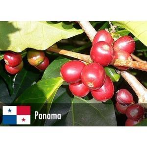 【送料無料】ゲイシャ(パナマ エスメラルダ農園) - 200g|cafe-adachi