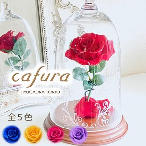 【送料無料】プリザーブドフラワー 美女と野獣 天然ダイヤ付き一輪の赤い薔薇 ガラスドーム|cafura
