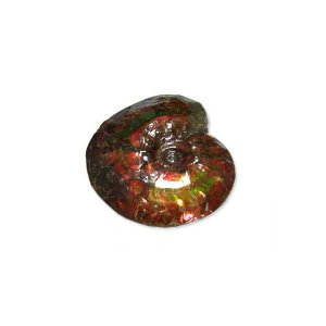 カナディアン アンモライト 原石 スタンダード ...の商品画像