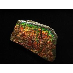 稀少な化石宝石【アンモライト原石の破片】Canada Fossils社|canadianselect