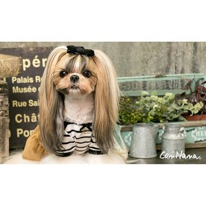 犬 服 ワンピース ボーダー リボン 秋冬 犬の服 きゃんナナ ドッグウェア ブランド|cannanaonline|06