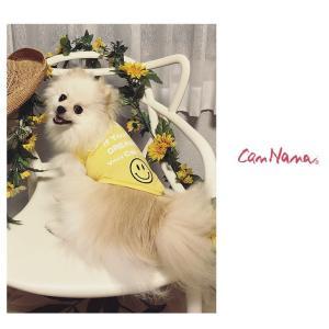 犬 服 Tシャツ 冷感 夏 春 スマイル ロゴ 犬の服 きゃんナナ ドッグウェア ブランド|cannanaonline|02