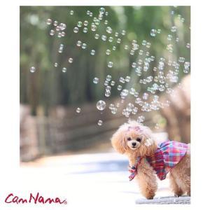 犬 服 ワンピース チェック リボン 春 夏 きゃんナナ ドッグウェア ブランド|cannanaonline|02
