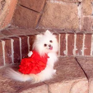 犬 服 ワンピース 秋 冬 犬の服 きゃんナナ ドッグウェア ブランド|cannanaonline|13
