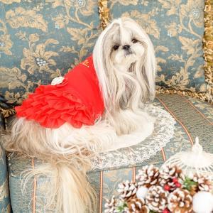 犬 服 ワンピース 秋 冬 犬の服 きゃんナナ ドッグウェア ブランド|cannanaonline|04