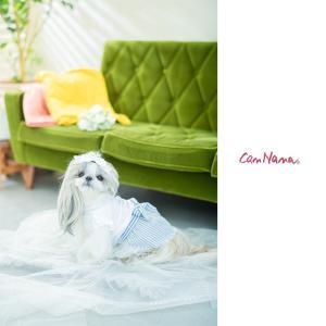 犬 服 春 夏 ワンピース リボン 犬の服 新作 きゃんナナ ドッグウェア ブランド|cannanaonline|11