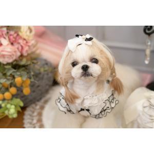 犬 服 春 夏 ワンピース エレガント フリル 犬の服  きゃんナナ ドッグウェア ブランド|cannanaonline|13