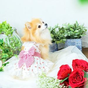 犬 服 ワンピース 春 夏 さくらんぼ 柄 レース 犬の服 きゃんナナ ドッグウェア ブランド|cannanaonline|13