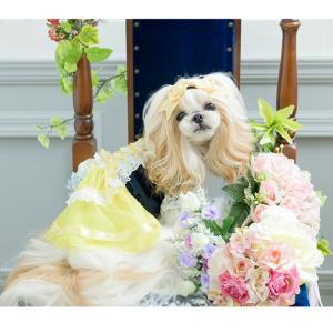 犬 ドレス プリンセス 撮影 お出かけ きゃんナナ ドッグウェア ブランド|cannanaonline|13