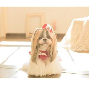 犬 服 ワンピース 秋 冬 さくらんぼ 犬の服 新作 きゃんナナ ドッグウェア ブランド|cannanaonline|14