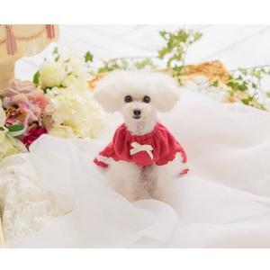 犬 服 ワンピース 秋 冬 さくらんぼ 犬の服 新作 きゃんナナ ドッグウェア ブランド|cannanaonline|18