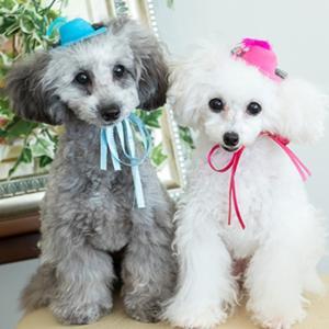 犬 アクセサリー 帽子 犬用 グッズ アクセ ピンク ブルー WEB限定販売 きゃんナナ ブランド|cannanaonline