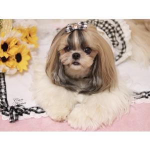 クール マット ひんやり ペット  犬 チェック  WEB限定 きゃんナナ ドッグウェア ブランド|cannanaonline|04