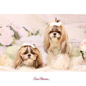 背景 タペストリー 写真 フォト ワンピース ウェア セット 犬 服  ブランド きゃんナナ|cannanaonline|17