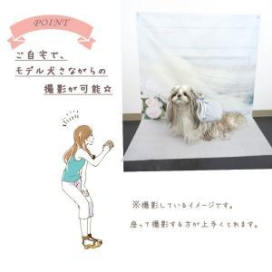 背景 タペストリー 写真 フォト ワンピース ウェア セット 犬 服  ブランド きゃんナナ|cannanaonline|05