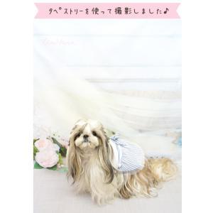 背景 タペストリー 写真 フォト ワンピース ウェア セット 犬 服  ブランド きゃんナナ|cannanaonline|06
