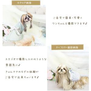 背景 タペストリー 写真 フォト ワンピース ウェア セット 犬 服  ブランド きゃんナナ|cannanaonline|07
