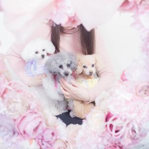 インターペット イベント 犬 写真 家族  犬の服 ドッグウェア きゃんナナ|cannanaonline|04