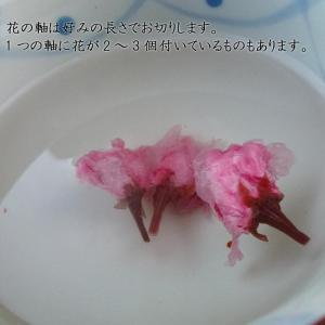 無添加の桜花漬け(さくらの花の塩漬け) 1kg|car-media|04