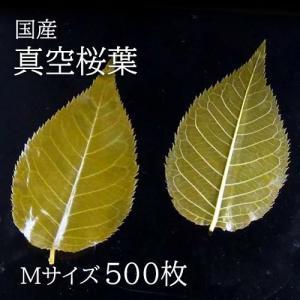 真空桜葉(さくらば)Mサイズ 500枚|car-media