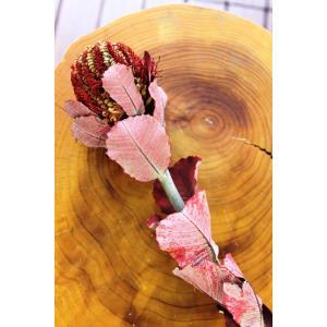 バンクシア・スカーレット・プリザーブド Banksia Coccinea (プリザーブドフラワー)|caroblanc