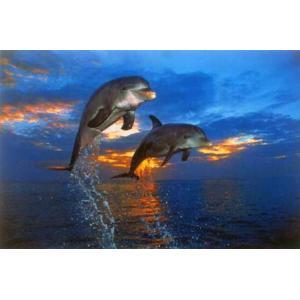 二匹のイルカの戦い ポスター|catstyle