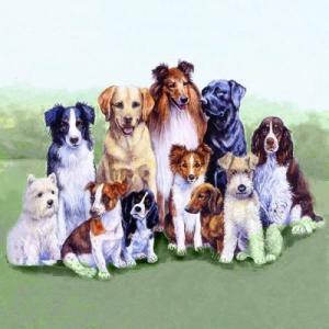 Ambiente オランダ ペーパーナプキン 仲の良い犬達 PEDIGREE DOGS 13307875 バラ売り2枚1セット デコパージュ ドリパージュ ccpopo