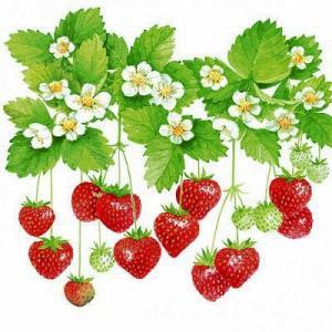 Ambiente オランダ ペーパーナプキン 夏の果物 SUMMER FRUITS  13308205 バラ売り2枚1セット デコパージュ ドリパージュ|ccpopo