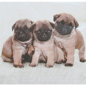 Ambiente オランダ ペーパーナプキン PUG DOG 13308555 バラ売り2枚1セット デコパージュ ドリパージュ ccpopo