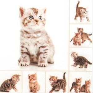 かわいいペーパーナプキン ドイツ製 かわいい子猫 (211535) 2枚 デコパージュ ドリパージュ ccpopo
