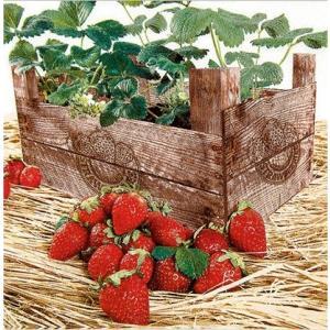 かわいいペーパーナプキン Strawberry Case いちご 211628 デコパージュ ドリパージュ|ccpopo