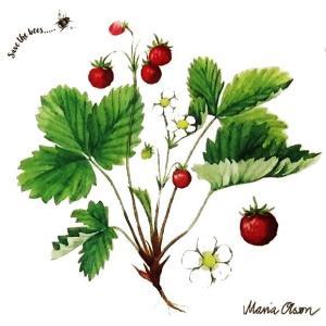 Duni デュニ スウェーデン ペーパーナプキン ワイルドストロベリー いちご 苺 イチゴ バラ売り2枚1セット177070 デコパージュ ドリパージュ 北欧|ccpopo