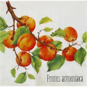 IHR ドイツ ペーパーナプキン アンズ 杏子 PRUNUS ARMENIACA cream バラ売り2枚1セット L-782260 デコパージュ ドリパージュ|ccpopo