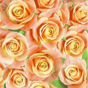Maki ポーランド ペーパーナプキン Lunch napkins 華やかなバラ Rosen rose バラ売り2枚1セット SLOG-028901