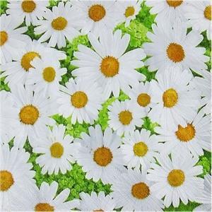 1枚バラ売りペーパーナプキン Paper+Design ドイツ デイジーの花園 Daisies allover 200517 デコパージュ ドリパージュ|ccpopo