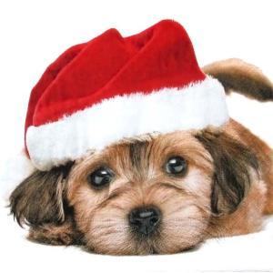 Paper+Design ドイツ ペーパーナプキン サンタドッグ Santa dog バラ売り2枚1セット L-600215 デコパージュ ドリパージュ|ccpopo