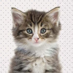 Stewo スティーボ社 スイス ペーパーナプキン 猫 キャット Liva grau hell バラ売り2枚1セット L-72-6709-66|ccpopo